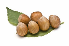 Some hazelnuts on its leaves. Some hazelnuts on its leaves isolated on a white background stock photography