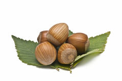 Some hazelnuts with leaves. Some hazaelnuts with leaves isolated on a white background royalty free stock photos