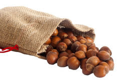 A some hazelnuts. Some hazelnuts placed over a white background royalty free stock images
