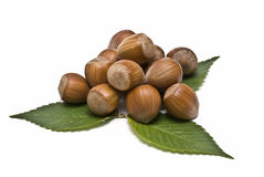 Some hazelnuts  with some leaves. Some hazaelnuts with some leaves isolated on a white background royalty free stock images
