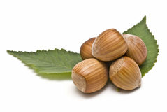 Some hazelnuts on two leaves. Some hazaelnuts on two leaves isolated on a white background stock image