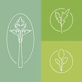 Some herbs linear icons set 03 Stock Photography