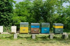 Beehives with bees. Some hives for the breeding of bees stock photo