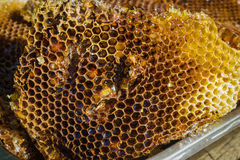 Some honeycombs from wild bees Stock Photos