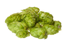 Some hops cones Royalty Free Stock Photos