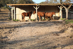 Some horse under the shelter Stock Photo