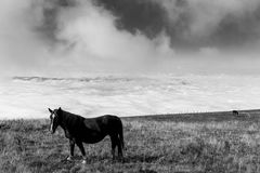 Some horses pasturing on top a mountain, beneath a big sky with Royalty Free Stock Photo