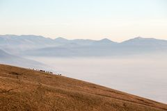 Some horses on top of a mountain, over a sea of fog filling the. Umbria valley, with warm, golden hours colors Stock Image