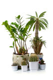 Some houseplants Royalty Free Stock Image