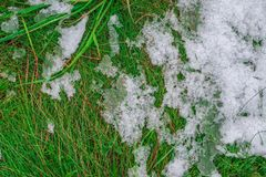 Some ice and snow on green grass. royalty free stock images