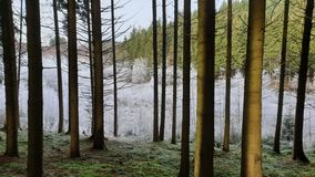 White trees in the woods of the Belgian Ardennes. Some iced and green trees in the woods of the Belgian Ardennes royalty free stock photo