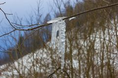 Icicles on a branch, frozen water. Some icicles on a branch, an icicled limb stock images