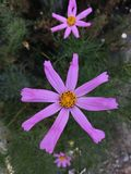 Some kind of a beautiful flower found by us. It was sunny and good day when we have found this firewood royalty free stock images