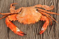 Some kind of crab Royalty Free Stock Images
