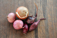 Some kind of onion bulb. Some kind of colorful onion bulb on rustic table Stock Photo