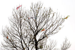 Some kites on a bald tree. Some kites with on string on a bald tree Stock Photography