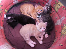 Some kittens in a bascket. Four sweet baby cat stay in a basket Stock Images