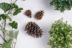 Large Pine Cones with Foliage Flat Lay Top View. Some Large Pine Cones with Foliage Flat Lay Top View Royalty Free Stock Photo