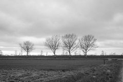 Some leafless trees at the edge of a field. Monochrome image of a small row of bare trees on a cloudy day in the beginning of the winter season Royalty Free Stock Image