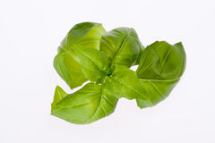 Some leaves of basil isolated on white background. Close up Royalty Free Stock Image