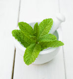 Some leaves Mint Stock Image