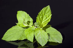 Some leaves of peppermint isolated on black background Stock Photography