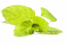 Some leaves of peppermint isolated on white  background Stock Images