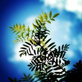Some leaves on a sunny day. With a blue sky Royalty Free Stock Photography