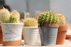 Some little cactus in pots. Detailed view of some little cactus inside different pots, landscape cut Stock Photography