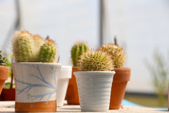 Some little cactus in pots. Detailed view of some little cactus inside pots, landscape cut Royalty Free Stock Image