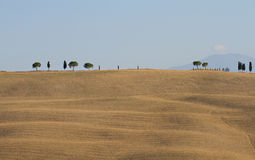 Some Lonely trees on a clay hil. L, Crete Senesi, Tuscany, Italy stock images