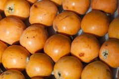 Some loquat Royalty Free Stock Photography