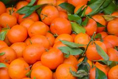 Some mandarins on sale at the market. Mandarins for sale at the market Stock Photography