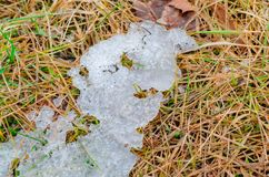 Some melting snow on dead bright grass on a sping field. Stock Images