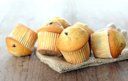 Some mini muffins. Some mini muffin for breakfast in the morning Royalty Free Stock Photos
