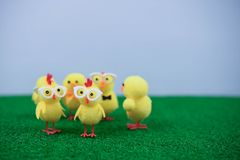 Some miniature cute yellow Easter chick decorations on green grass. Cute Easter time yellow chicks on green grass with blue background stock image