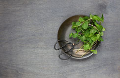 Some mint in the plate. Some mint with retro scissors. Top view Royalty Free Stock Image