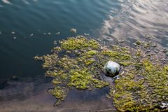 Some Moss on Water at Swamp Area. In my town. Photo has taken from Mavisehir/Izmir Royalty Free Stock Photography