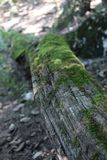Some moss on a wood. In a forest Stock Images