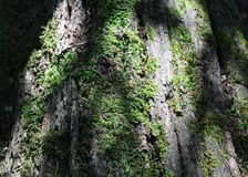 Some moss on a wood. In a forest Royalty Free Stock Photography