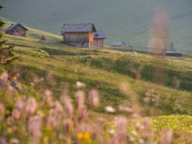 Some mountain huts in the fields, Dolomites, Italy. Some mountain huts in the fields with out of focus pink flowers on the foregroung, Dolomites, Italy Royalty Free Stock Image