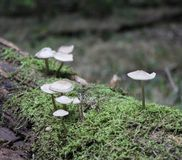 Mushrooms in the forest. Some mushrooms in the forest Royalty Free Stock Photography