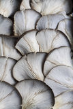 Some mushrooms at street market. Image of some mushrooms at street market Royalty Free Stock Image