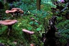 Some mushrooms on tree trunk with moss and clover. Some mushrooms spotted on tree trunk with moss and clover stock photography