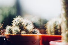 Cactus lover. These are some of my cactus royalty free stock image