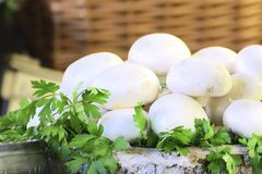 Some natural mushrooms in a basket decorated with parsley leaves. Empty copy space for Editor`s text Royalty Free Stock Image