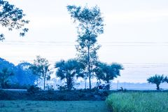 Some natural scenery on the highway road. Royalty Free Stock Photo