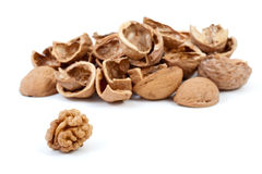 Some nutshells and walnut kernel. Isolated on the white background stock image