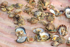 Some opened pearl oysters. Oysters are bivalve molluscs living in marine environment royalty free stock images