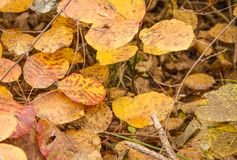 Autumn leaves in a mountain path. Some orange fall leaves, a beautyful mountain path with color of this season Stock Photo
